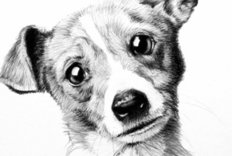 Pet Portrait Art Illustration
